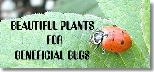 Beautiful Plants for Beneficial Bugs