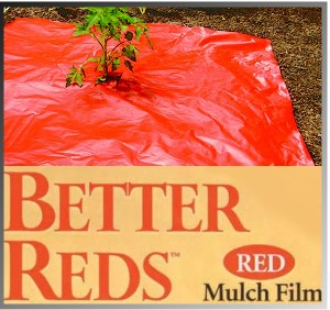 Bigger tomatoes with Red Mulch.