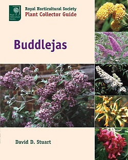 Buddlejas Royal Horticultural Society