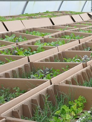 36 Pack Boxes of Plants ready for shipping.