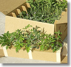 Herb Garden Assortment Box