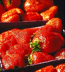 Boxes of delicious strawberry plants!