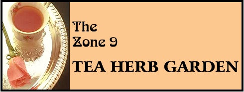 THE ZONE 9 TEA HERB GARDEN