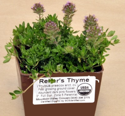 Reiter's Thyme ready for shipping.